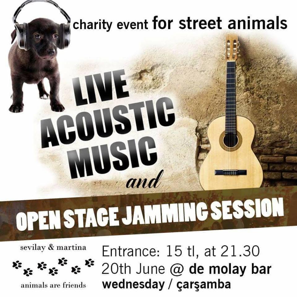 Благотворительный концерт в пользу уличных животных