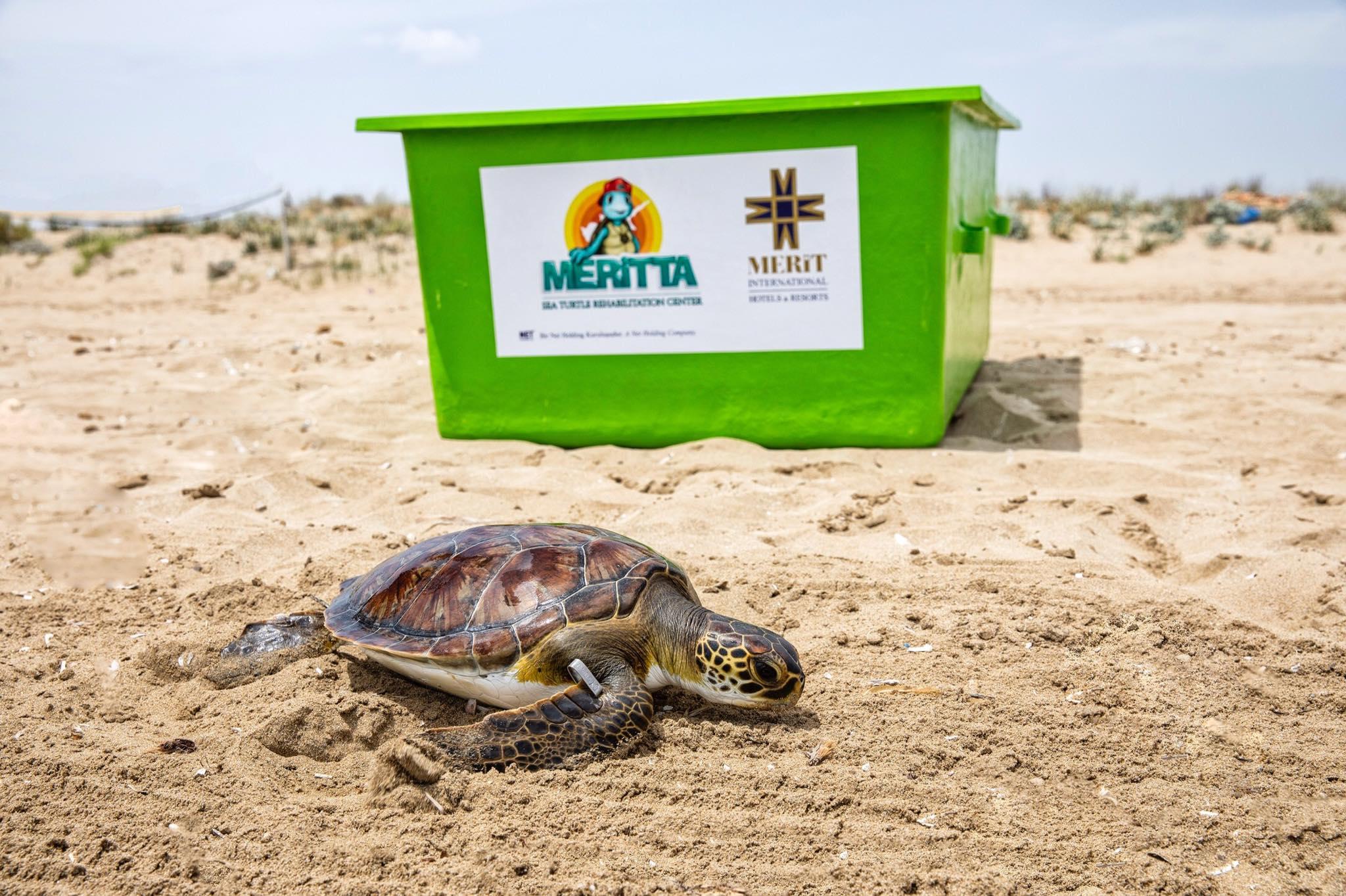 Новый центр для морских черепах