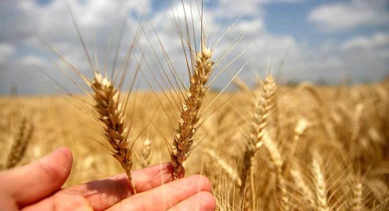 Фермеры ТРСК получат гранты от Европейской комиссии