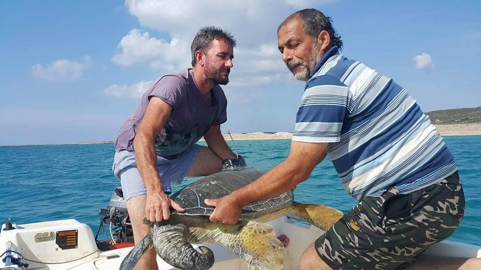 На Северном Кипре спасают морских черепах от исчезновения