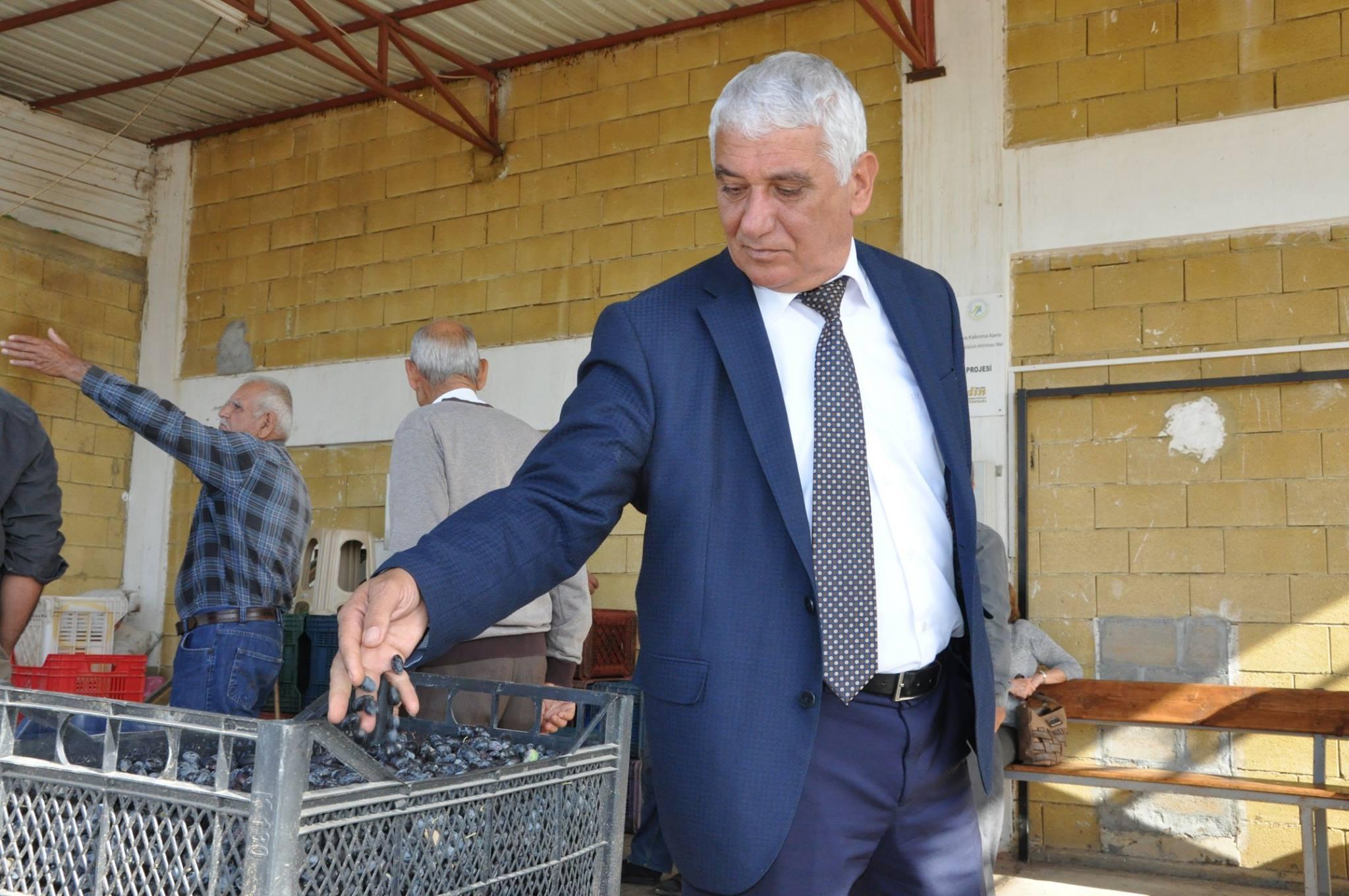 Оливковый процесс на Кипре