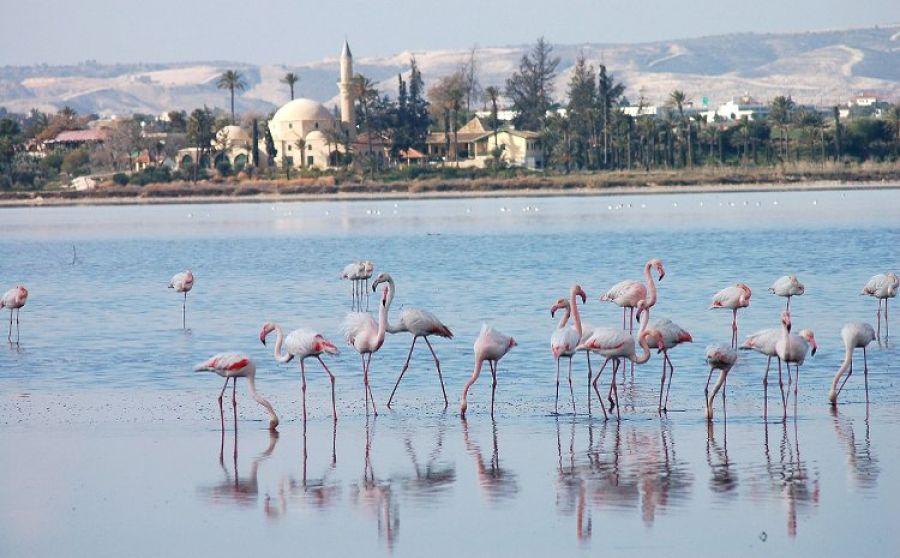 Люди мешают спокойной жизни фламинго