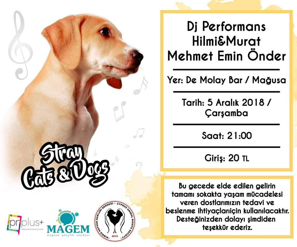 Live Music For Stray Animals