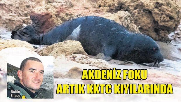 На Северном Кипре обитает 7 тюленей редкого вида
