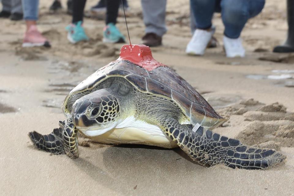 На Кипре оказывают помощь черепахам