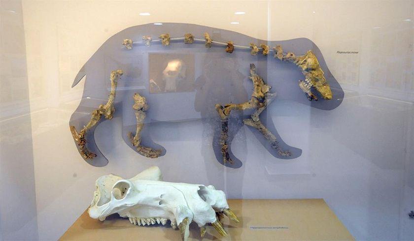 Раскопки ученых обнаружили на Кипре...