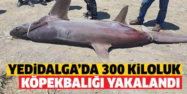 Недалеко от Кирении поймали 300-килограммовую акулу
