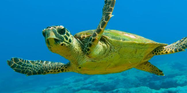 Все, что мы знаем о черепахах на Северном Кипре