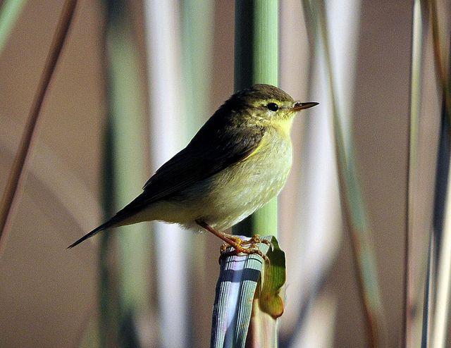 Сезон наблюдения за редкими видами птиц откроется 2 сентября