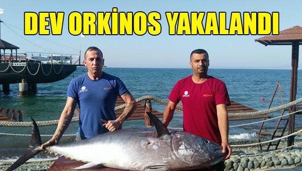 В Кипрском море плавают гигантские рыбы