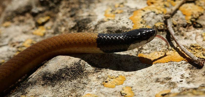 На Кипре появился новый вид змей
