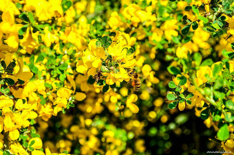 Ароматные желтые цветочки