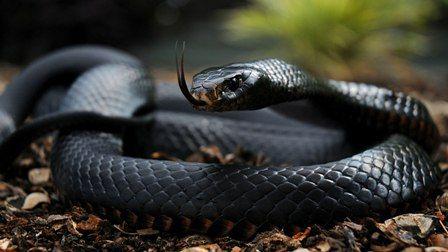 На Кипре сезон змей