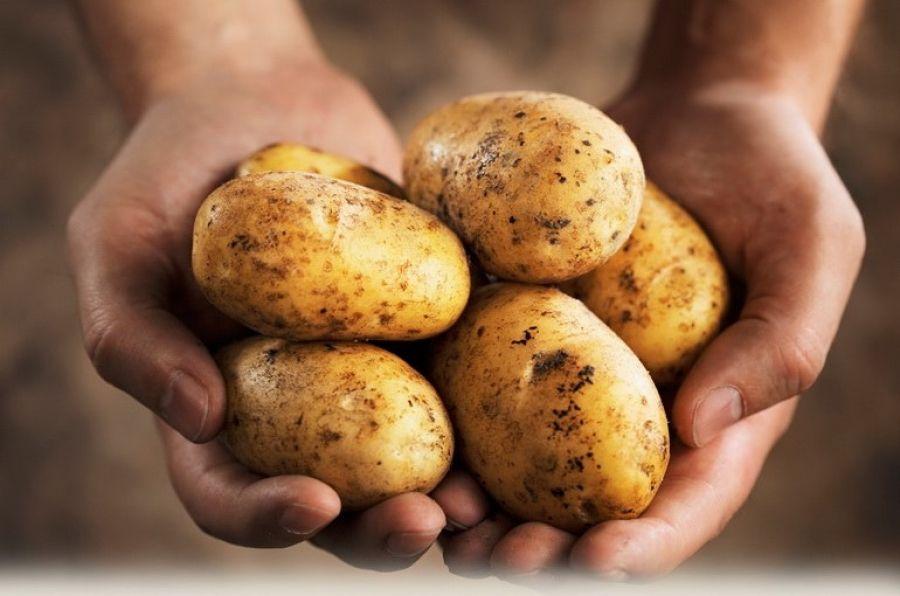 ТРСК продаст около 500 тонн картофеля соседям с Южного Кипра