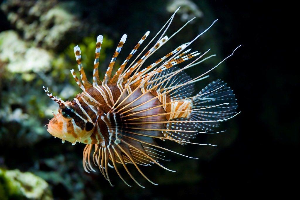 Кипр борется с ядовитой рыбой