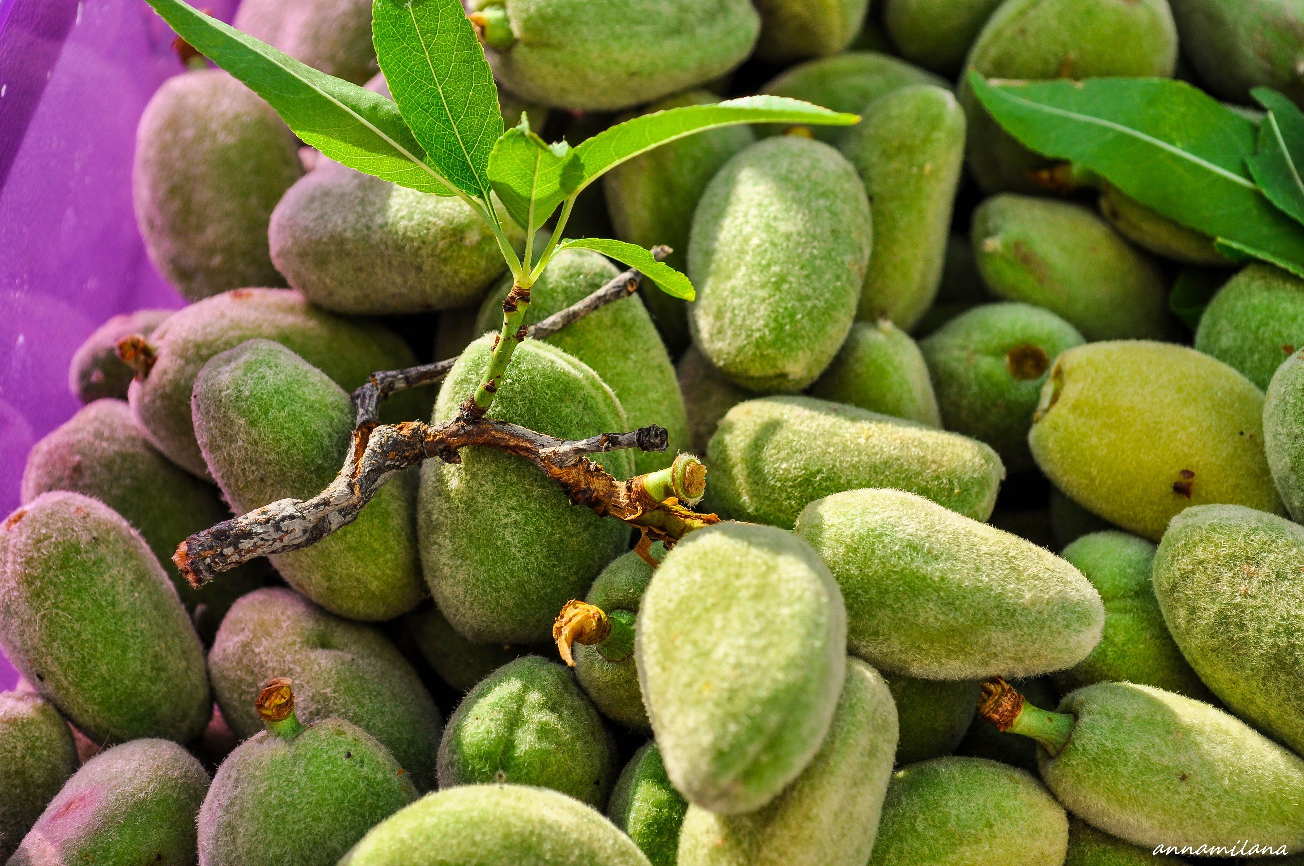 На Кипре вы сможете попробовать зеленый миндаль