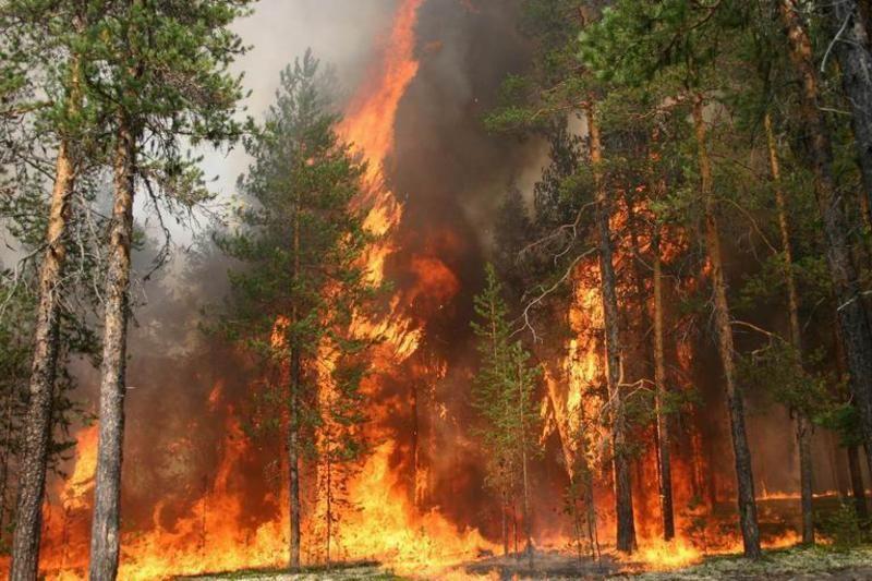Из-за халатности людей на острове происходят пожары