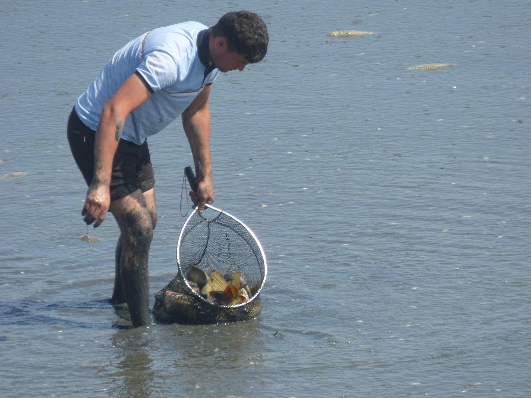 8 тысяч рыб были спасены от засухи и возвращены в водоем